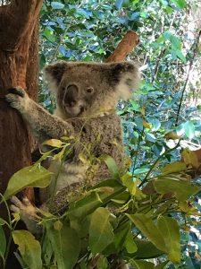 Australia and New Zealand trip